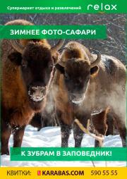Зимнее сафари: к зубрам в Сеймский заповедник