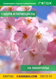 Sakura and primroses in Transcarpathia